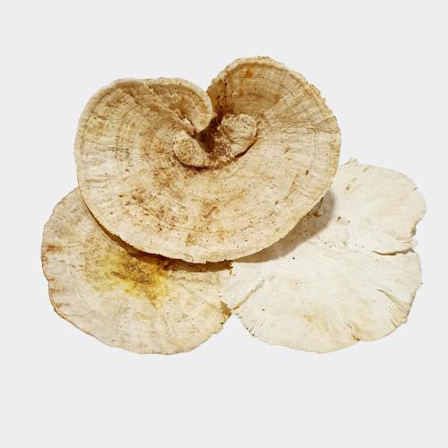 Ciuperci decorative albe 2