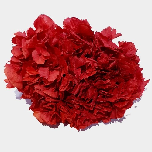 Flori stabilizate 1 Rosu 1