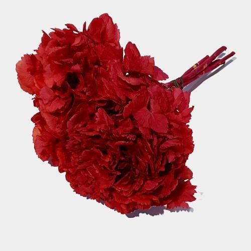 Flori stabilizate 1 Rosu 2