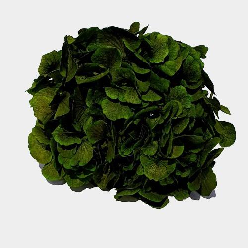 Flori stabilizate 1 Verde