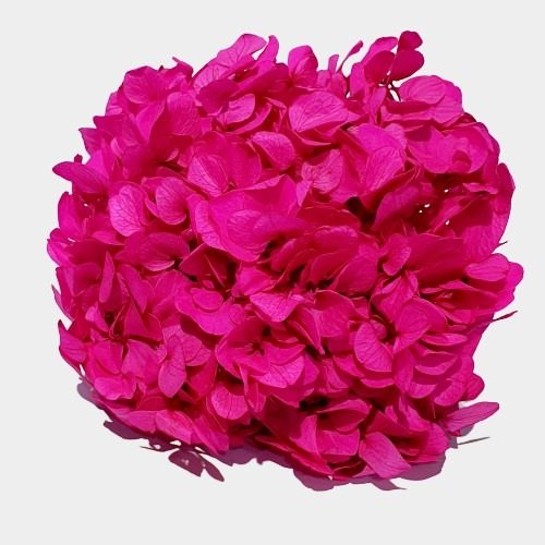 Flori stabilizate 2 Cyclam