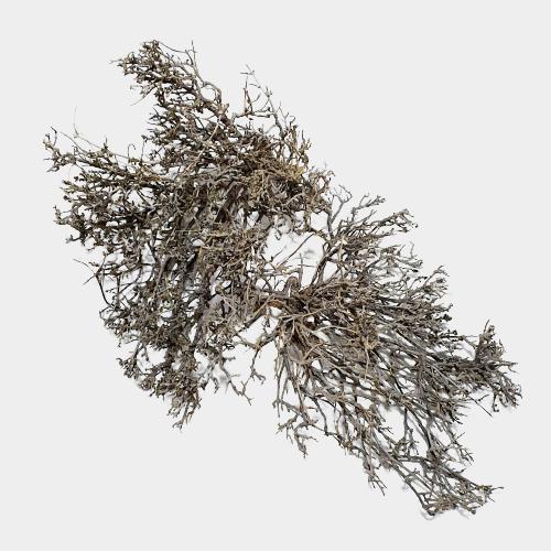 Lemne decorative 1 maro