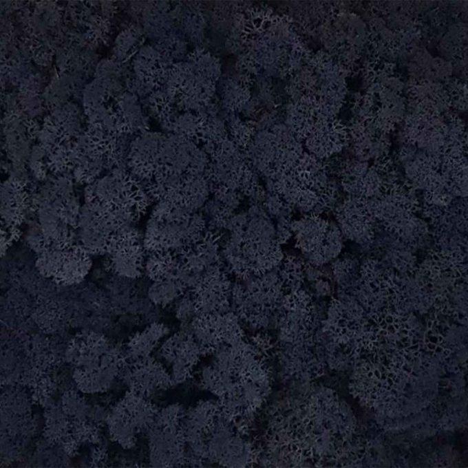 Licheni decorativi Moos Design Negru 600x573 1 1