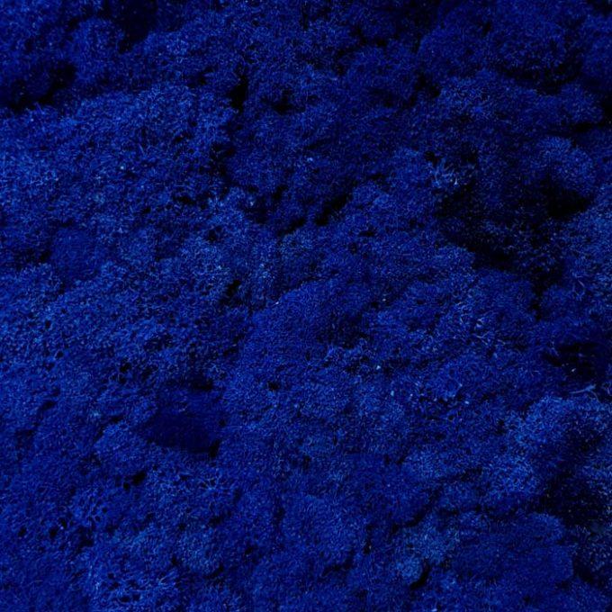 Licheni decorativi moos design albastru 3