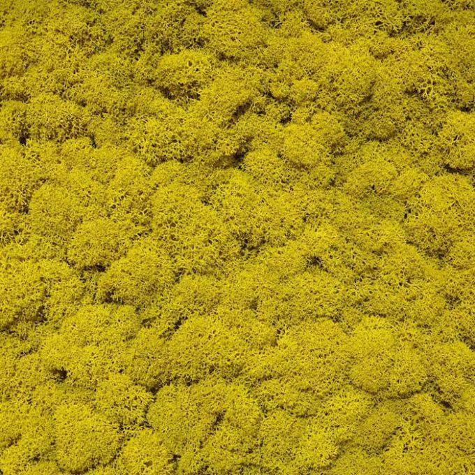 Licheni decorativi moos design galben 2
