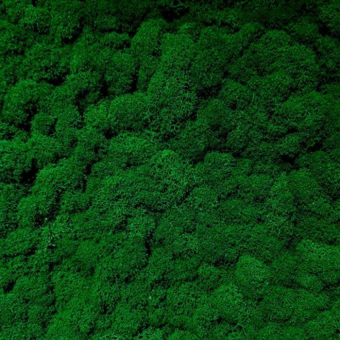 Licheni-decorativi-moos-design-verde-3