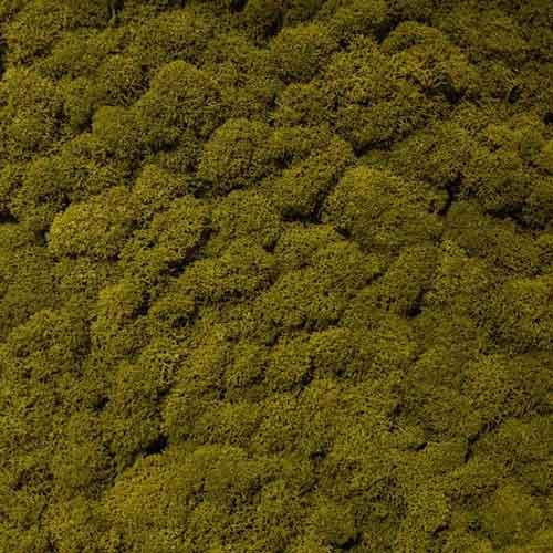 Licheni decorativi moos design verde 6 licheni ro