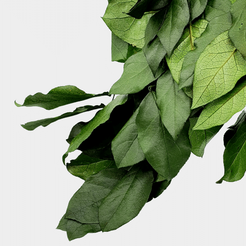 PLANTE STABILIZATE 36 2