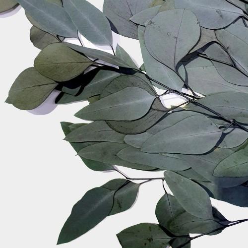 Plante stabilizate 10 2