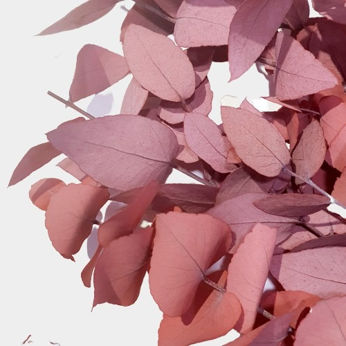 Plante stabilizate 11 Rosu 2 1