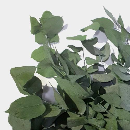 Plante stabilizate 11 Verde 2 1