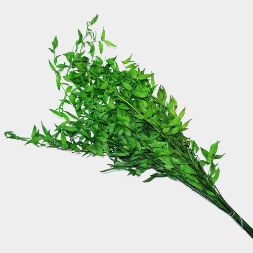 Plante stabilizate 12 Verde 1