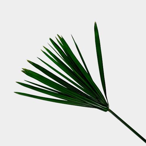 Plante stabilizate 13 Verde 2