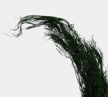 Plante stabilizate 19 2