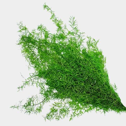 Plante stabilizate 2