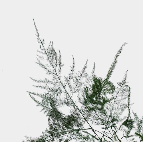 Plante stabilizate 22 2