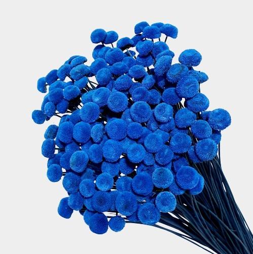 Plante stabilizate 24 Albastru 1
