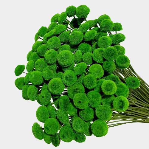 Plante stabilizate 24 Verde 2