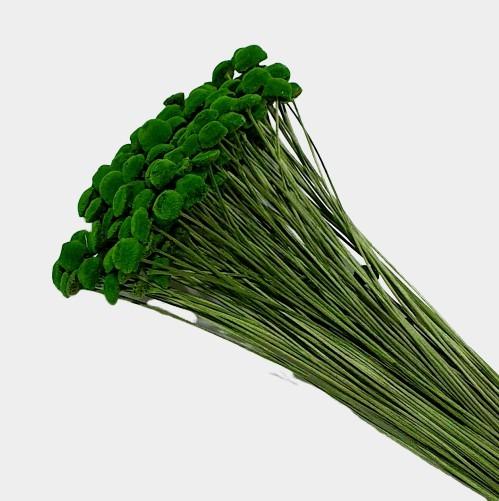 Plante stabilizate 24 Verde 2 2