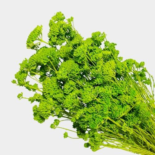 Plante stabilizate 27 Verde 1