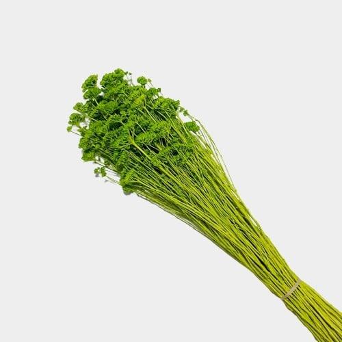 Plante stabilizate 27 Verde 2 1