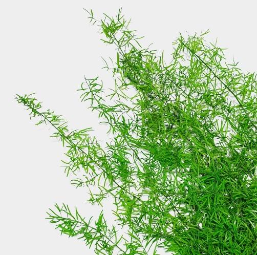 Plante stabilizate 2 2