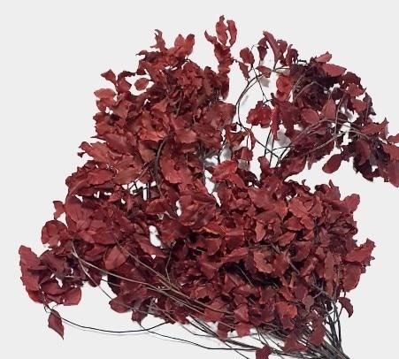Plante stabilizate 3 rosu 2