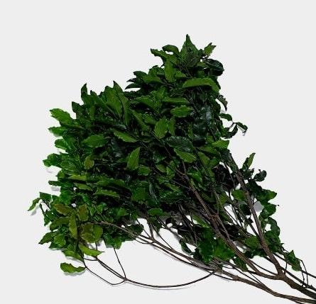 Plante stabilizate 3 verde 2