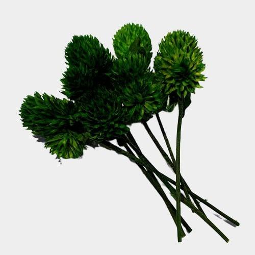 Plante stabilizate 31