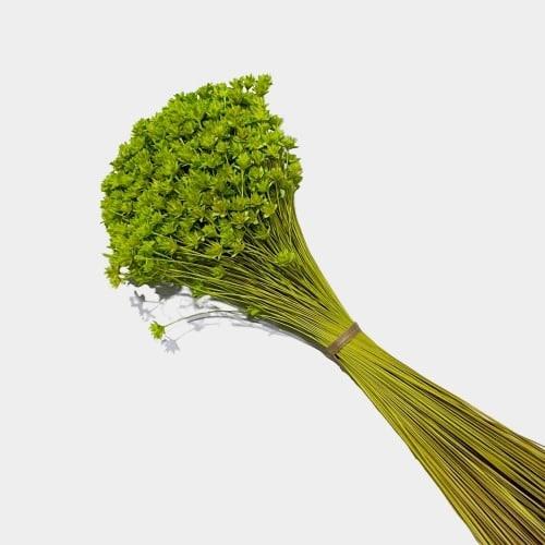 Plante stabilizate 34 2