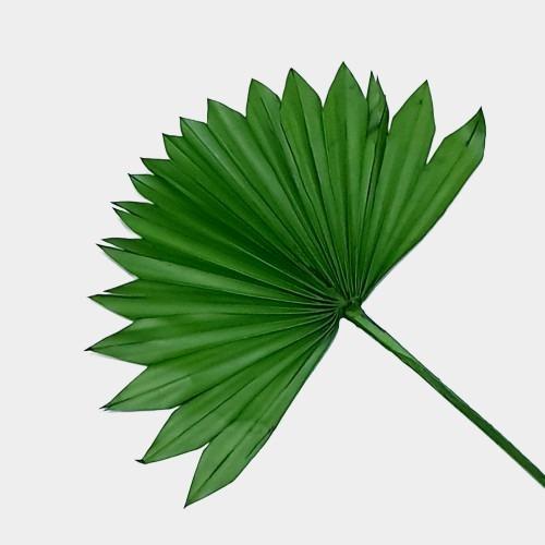 Plante stabilizate 5 2