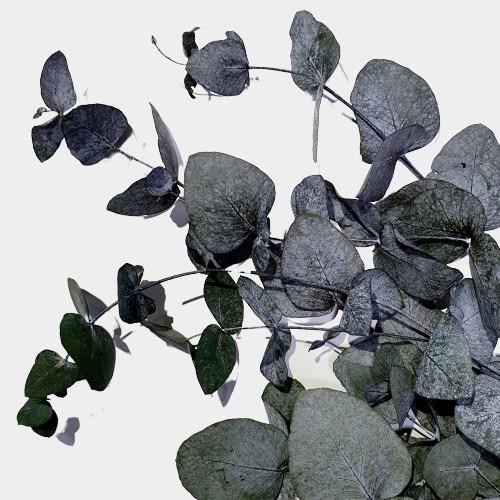 Plante stabilizate 7 verde 2