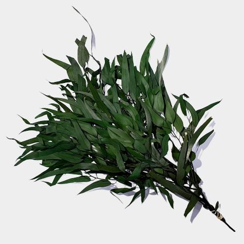 Plante stabilizate 8