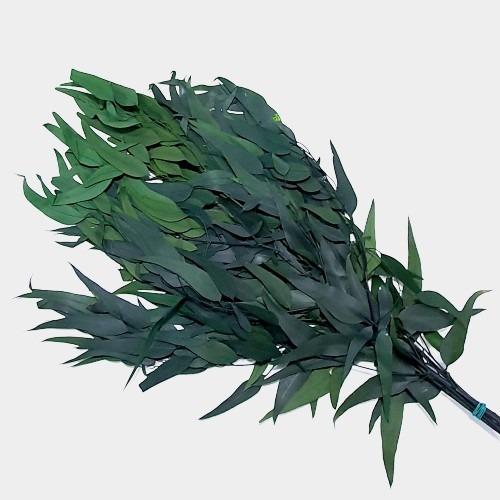 Plante stabilizate 8 2