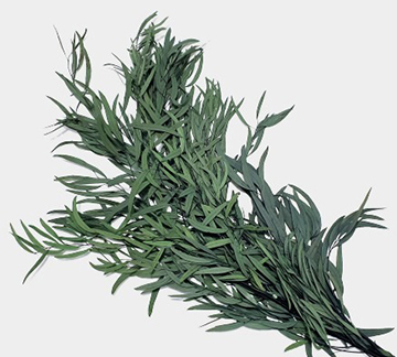 Plante stabilizate 9 1