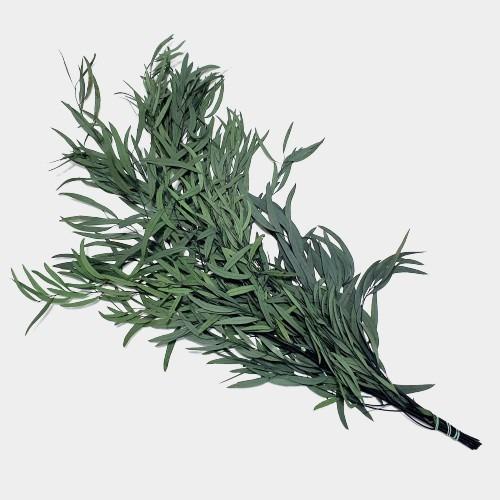 Plante stabilizate 9