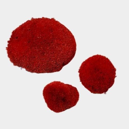 muschi bombat rosu 2