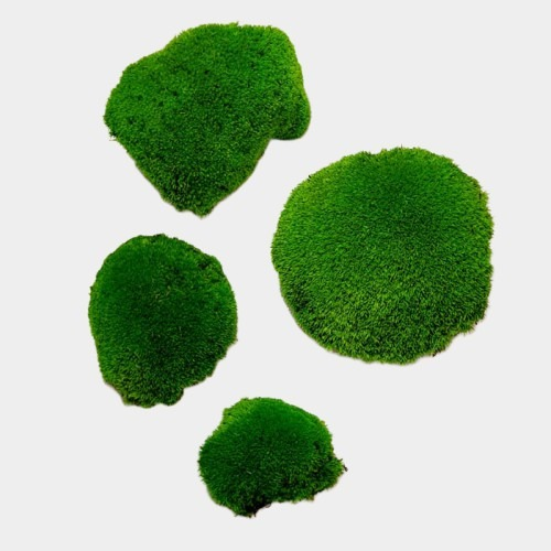 muschi bombat verde 2 1