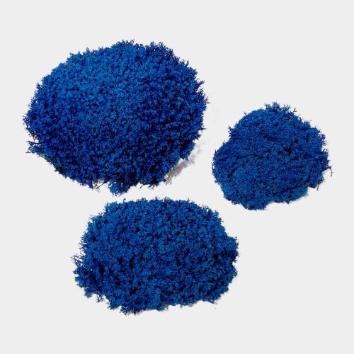 muschi cret albastru 2 1