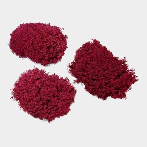 muschi cret rosu 1