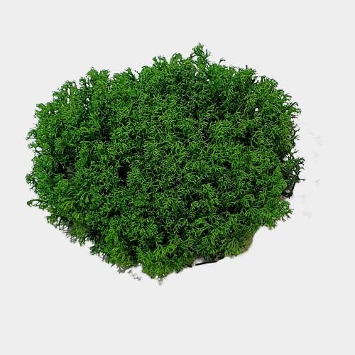 muschi cret verde 4