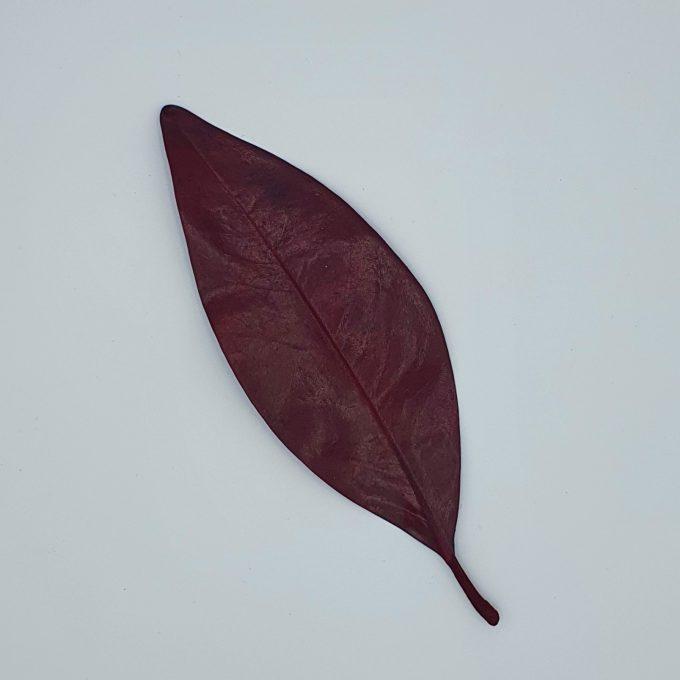 Frunze 9 rosu 2