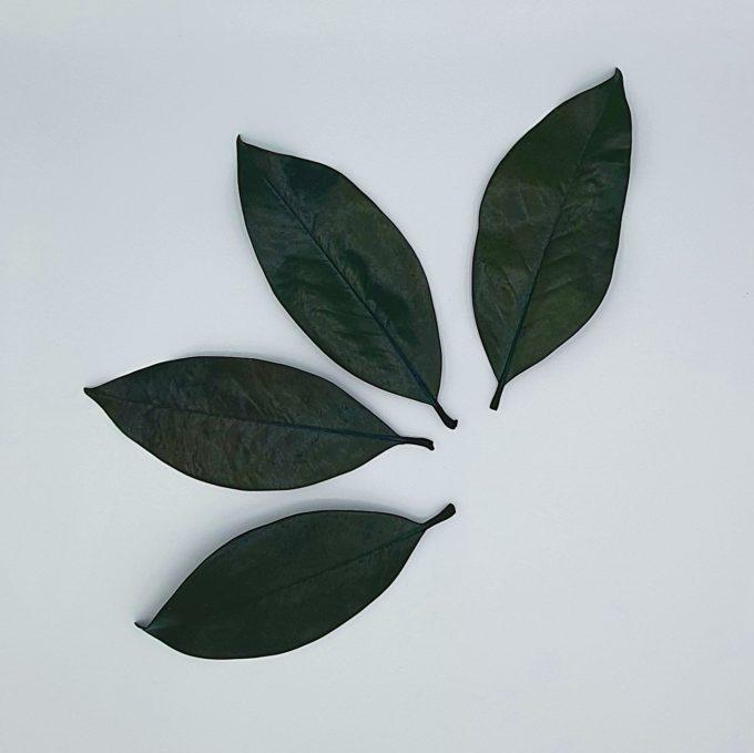 Frunze 9 verde 6