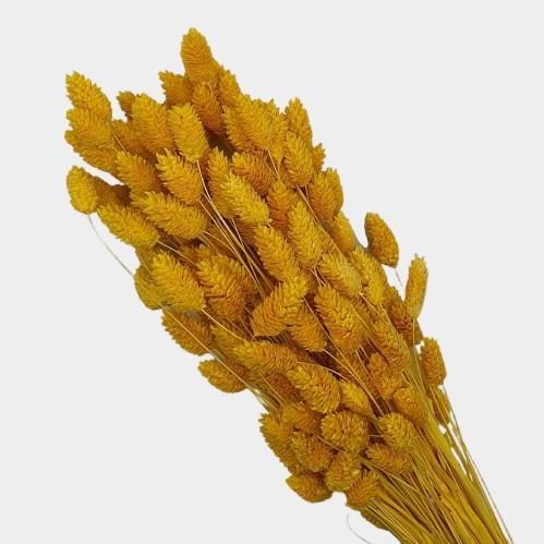 plante stabilizate 33 galben 1