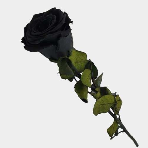 FLORI STABILIZATE 4 NEGRU trandafir negru rotated