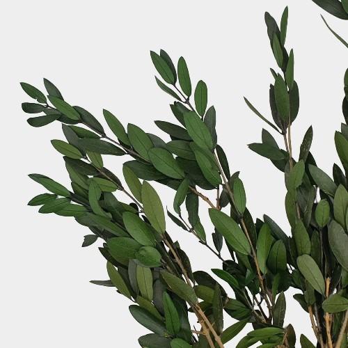 PLANTE STABILIZATE 38 2