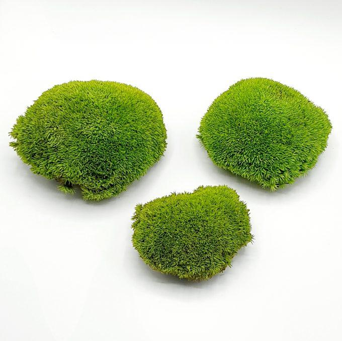 muschi bombat verde 1