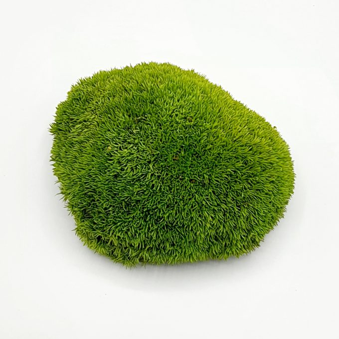 muschi bombat verde 1 2