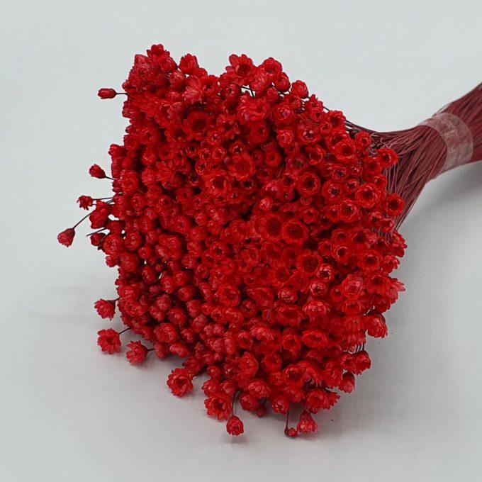 plante 40 rosu 2