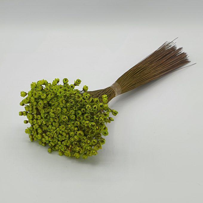 plante 40 verde 1
